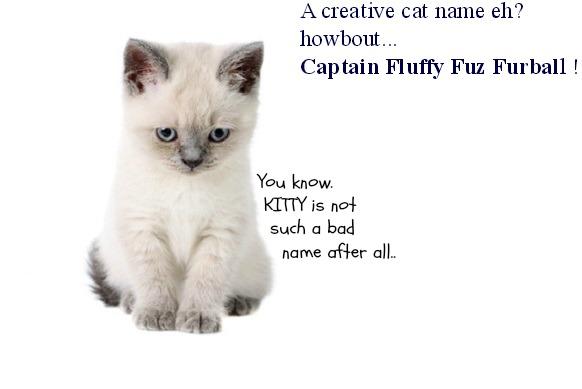 N Cat Names 15 White Cat Names You...