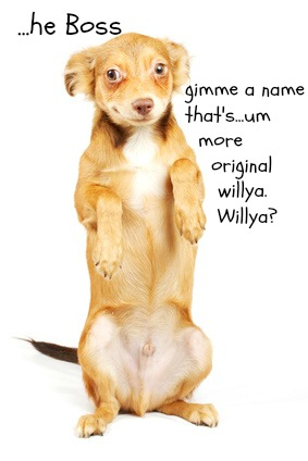 See 16 Funny Dog Names Every Pet Owner Will Love!