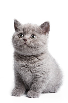 10 Original Kitten Names Pages Every Owner Must Check Out