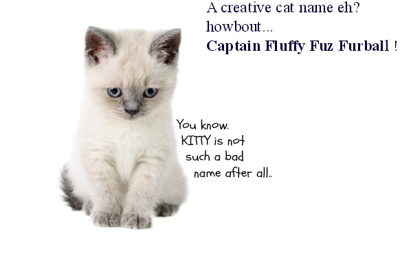 Cute Names For Male Siamese Cats