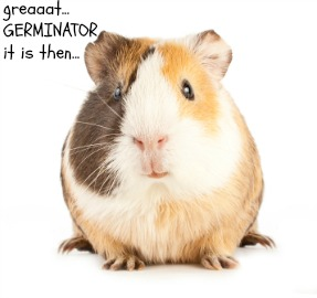 A funny rodent pet picture
