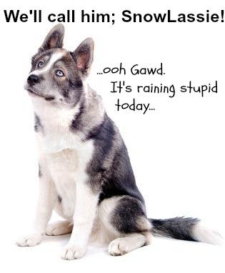 A good dog name