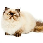 10 Original Kitten Names Pages Every Owner Must Check Out!