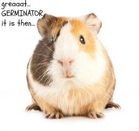 pet hamster names